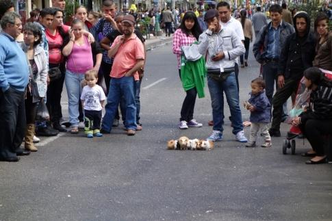 Street guinea pig race (Bogota, Colombia)