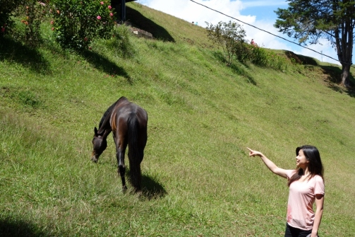Scared of the wild horse (Jerico, Colombia)