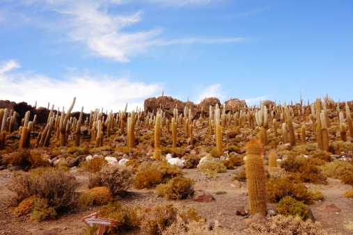 Incahausi Island in Salar De Uyuni