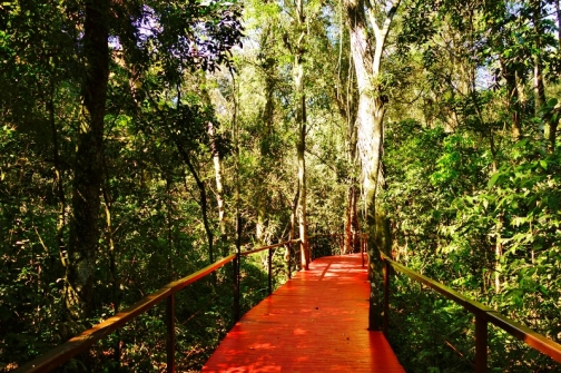 The walkways at our jungle lodge, La Cantera, in Puerto Iguazu