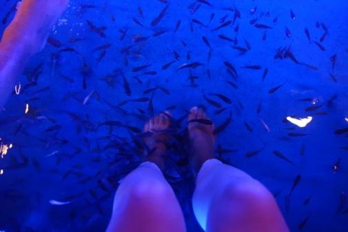 Fish spa (Penang, Malaysia)
