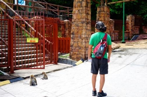 Monkeys at Penang National Park (Penang, Malaysia)