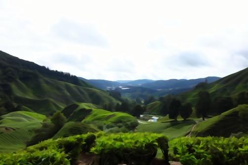 BOH tea fields, Cameron Highlands, Malaysia