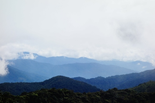 Rolling mountains (Cameron Highlands, Malaysia)